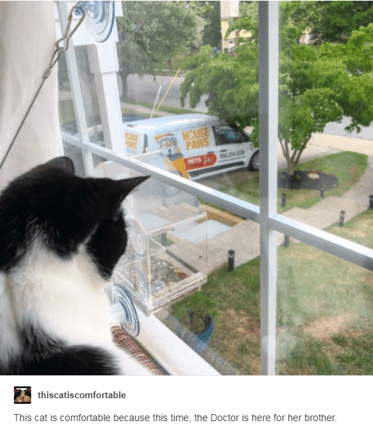 tumblr lorraine uncomfortable Cats comfortable - 7270661