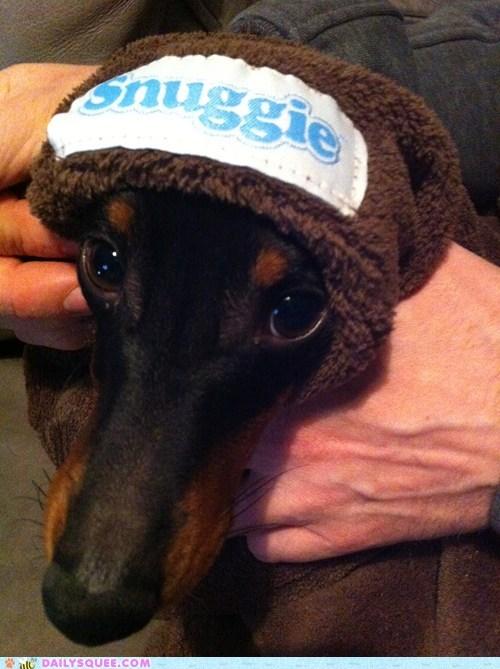 snuggie dogs - 7273141504