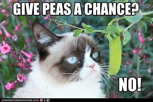 Grumpy Cat,peace