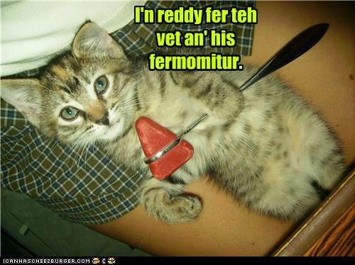 kitty vet - 7277272832