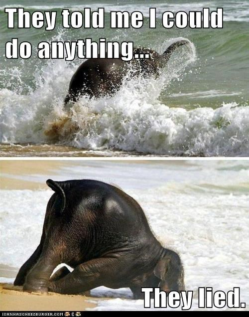 they said i could be anything,elephant