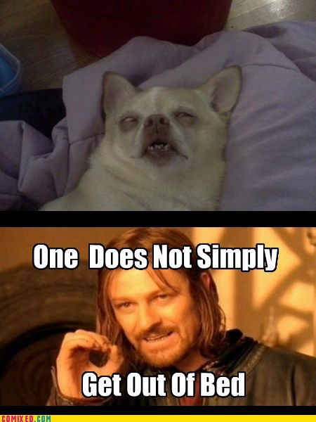 dogs,Lord of the Rings,bed time,Boromir,sleeping
