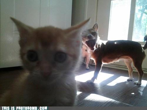 cat dogs animals - 7279086848