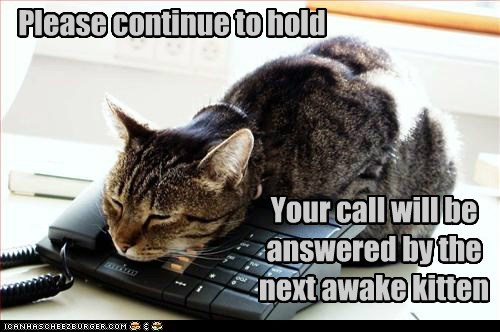 Please continue to hold Your call will be answered by the next awake kitten