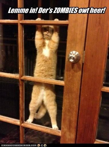 Lemme in! Der's ZOMBIES owt heer!