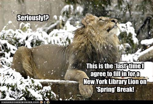 lions spring snow - 7283950848