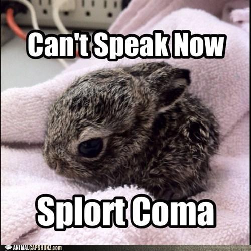 splort,bunny,squee