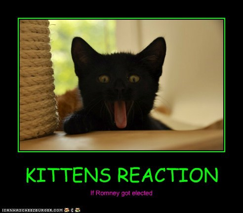KITTENS REACTION If Romney got elected