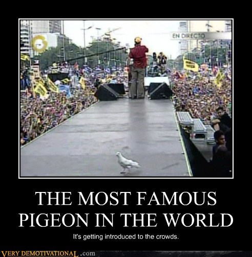 pigeon announcer famous