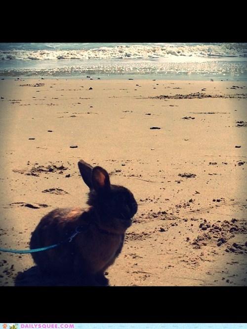 beach bunny - 7285954048