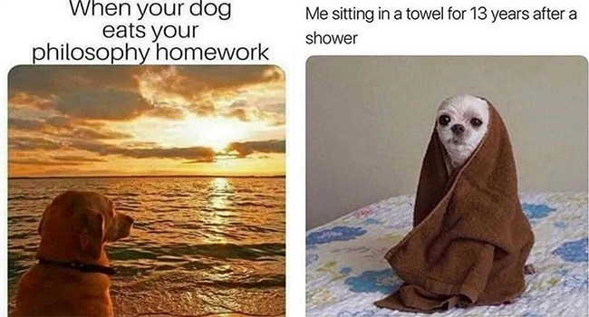 dogs funny memes Memes doggo doggo memes - 7286789