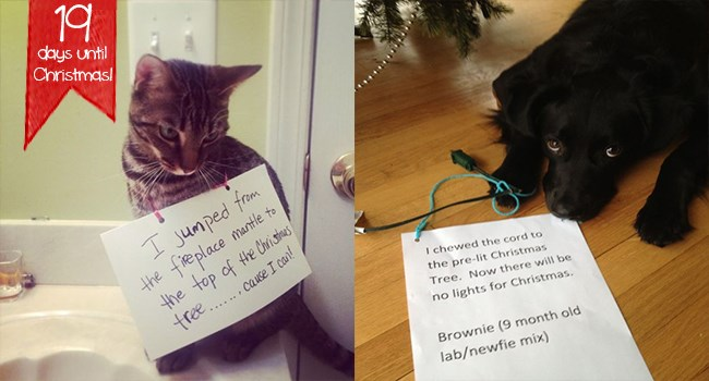 cats and dogs being shamed for ruining Christmas