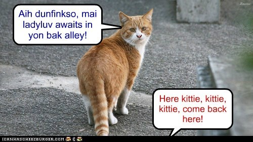 Here kittie, kittie, kittie, come back here! Aih dunfinkso, mai ladyluv awaits in yon bak alley!