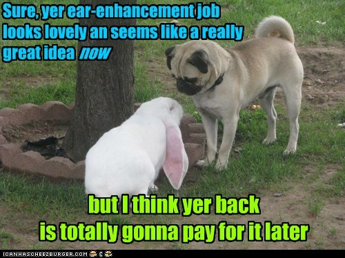 Sure, yer ear-enhancement job looks lovely an seems like a really great idea now but I think yer back is totally gonna pay for it later
