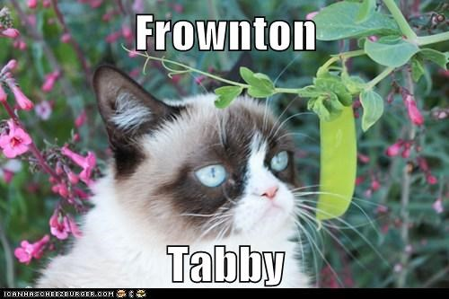 Grumpy Cat downton abbey frown - 7291935488