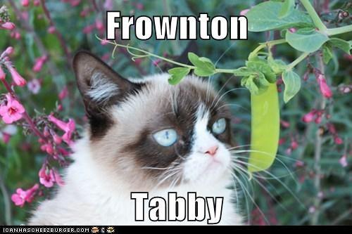 Grumpy Cat downton abbey frown - 7291935488