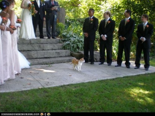 ceremonies wedding crashers Cats - 7293477120