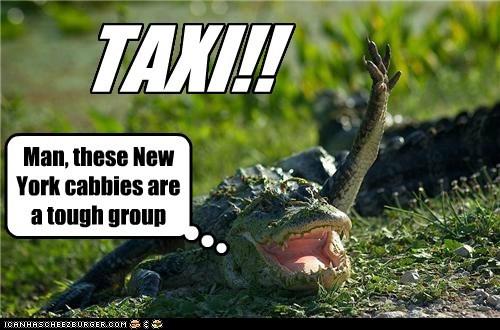 taxi new york aligator - 7293574144