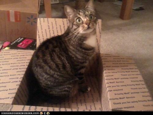 cat kitty - 7293652736