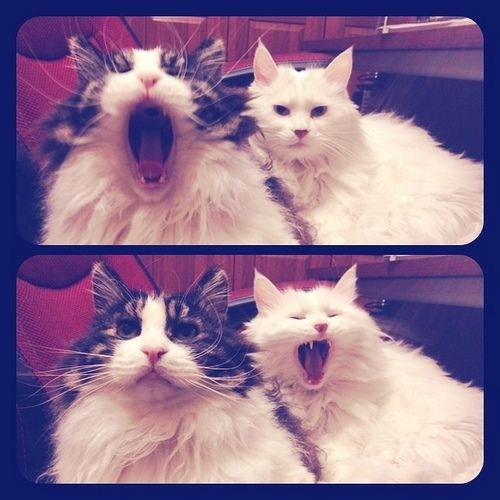 yawn,contagious