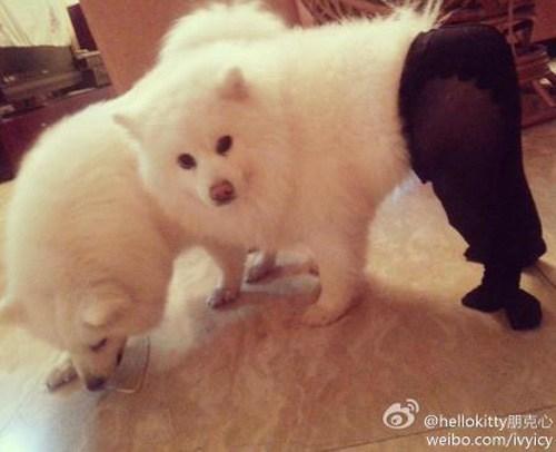Mammal - @hellokitty weibo.com/ivyicy