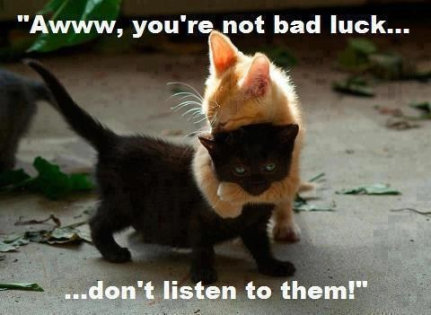 bad luck,hug,black cat
