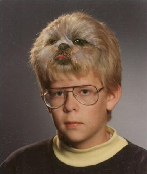 hair,dogs,wtf,style