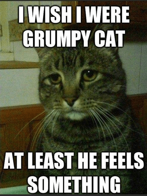 Grumpy Cat,feels,depressed cat