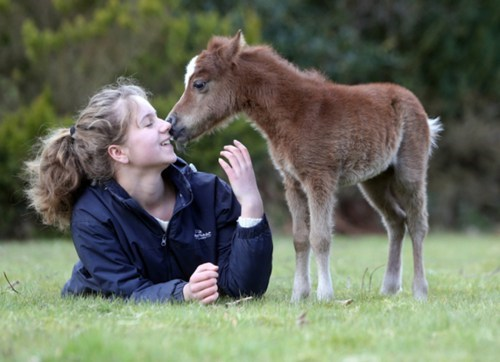 Miniature Horse,tiny,pony