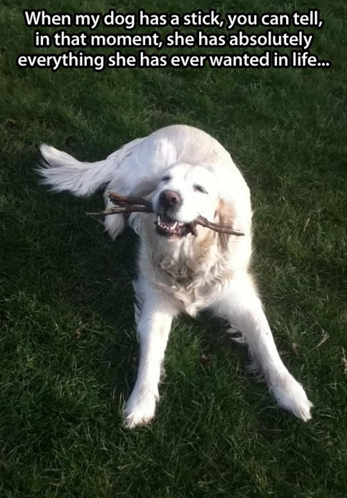 stick bliss happy