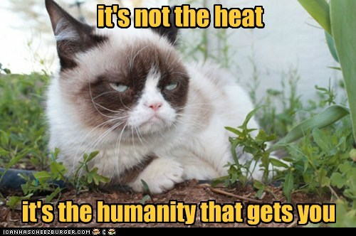 Grumpy Cat humanity - 7295117056