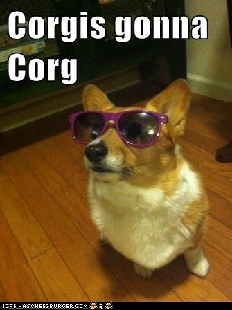 shades Deal With It corgi