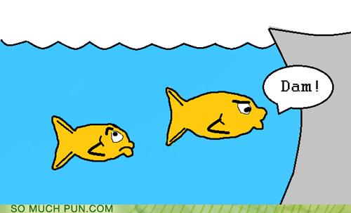damn,swearing,fish
