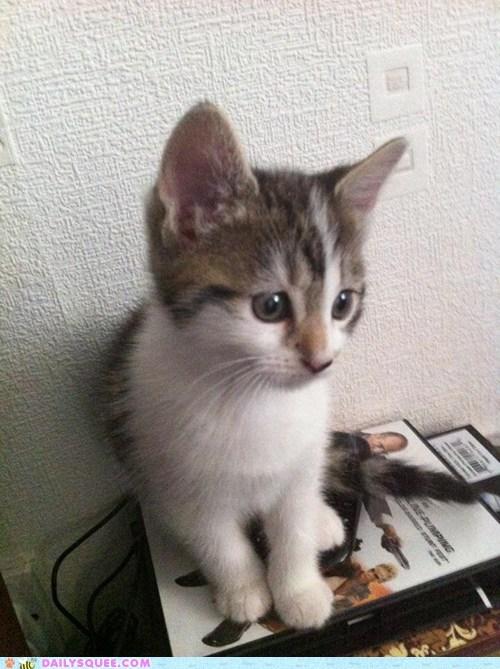sit kitty - 7295787520