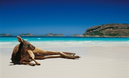kangaroo australia beach destination WIN! g rated - 7296087040