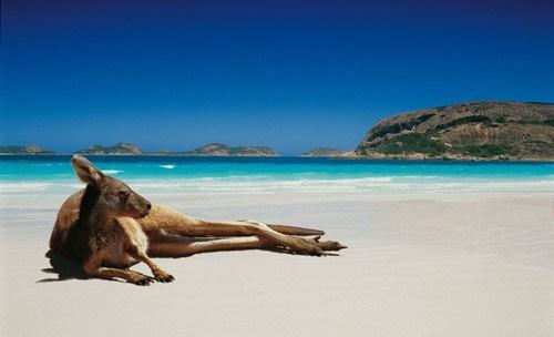 kangaroo australia beach destination WIN! g rated - 7296087040