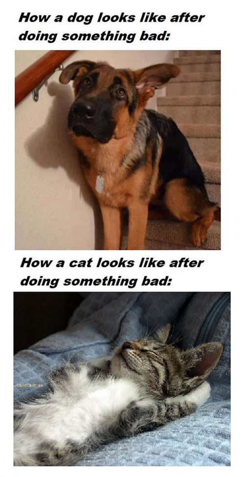 Cats guilty - 7296109824
