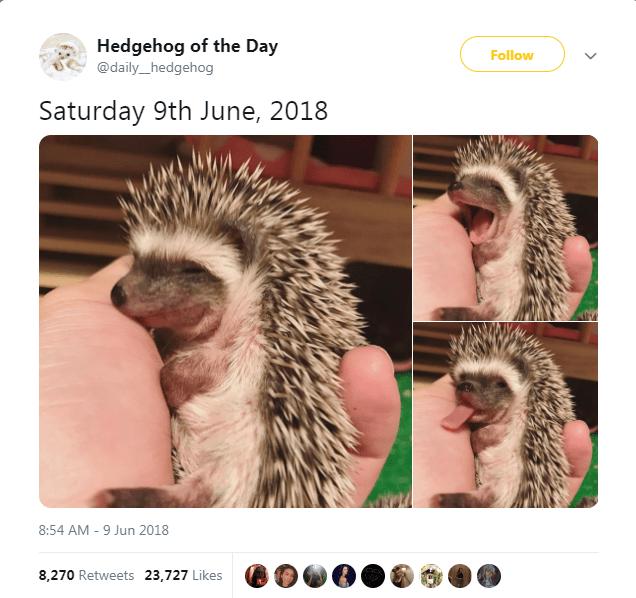 twitter hedgehogs daily in cute tweets