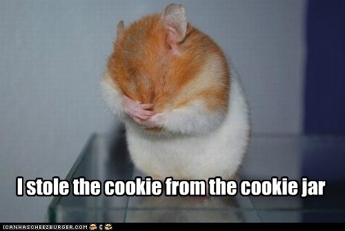 ashamed,stolen,cute,hamsters,cookies
