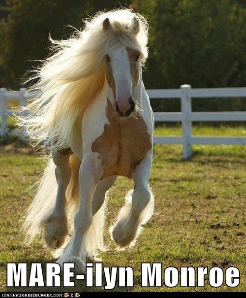 hair,marylin monroe,horses