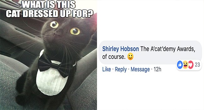facebook challenge Cats funny - 7297541