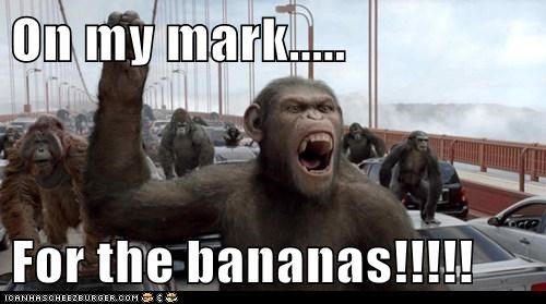 On my mark.....  For the bananas!!!!!