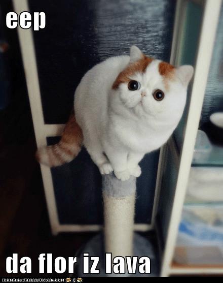 CAT:EEP