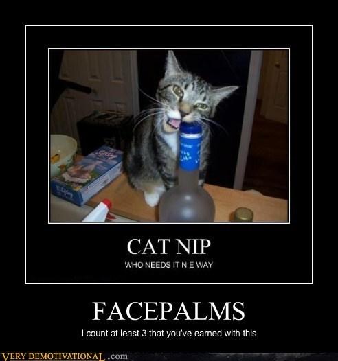 cat grammar booze - 7301745920