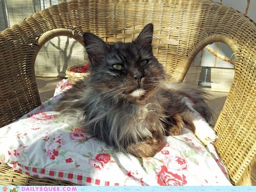 cat tomcat elderly animals - 7301897472