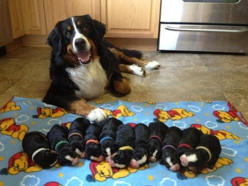 mother,puppies,proud