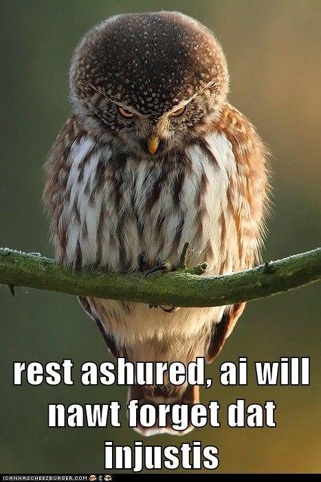 Owl - 7302365696
