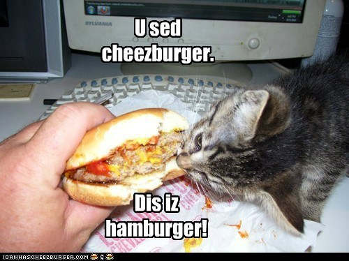 Cheezburger Image 7302447360