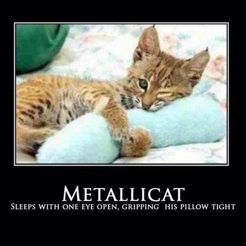 metallica,Enter Sandman,Cats,Music FAILS,g rated