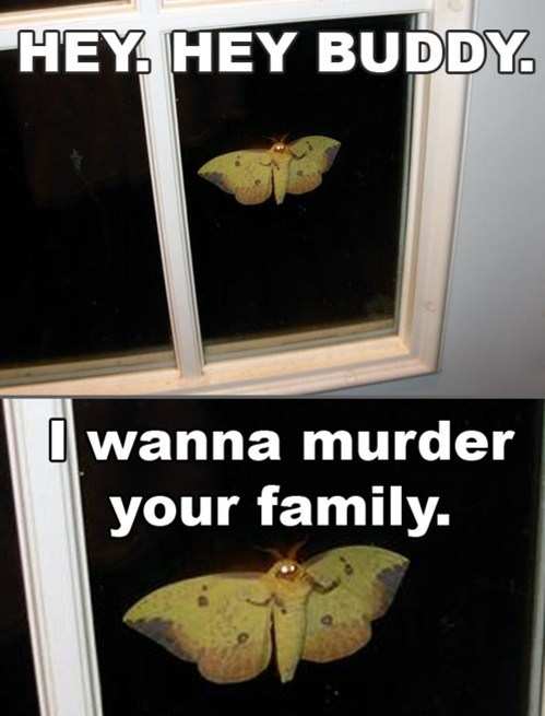 wtf moths i'm a fairy - 7303183872